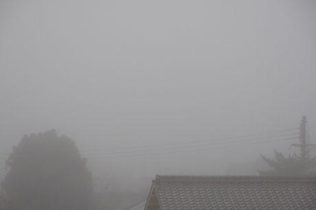 今朝の霧−1.jpg