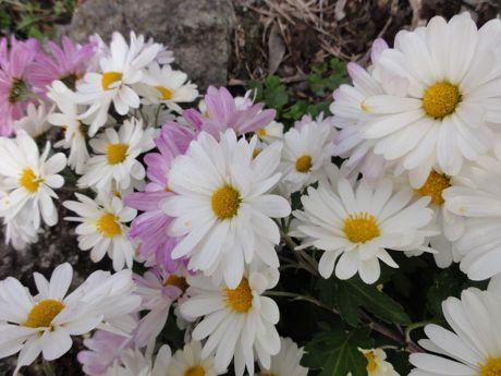 土手の花−2.jpg