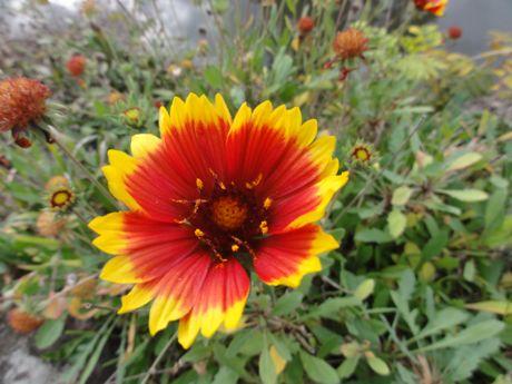 土手の花−3.jpg