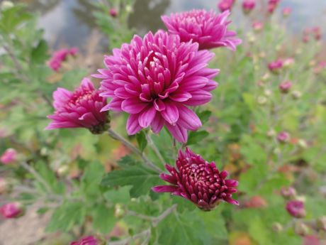 土手の花−4.jpg