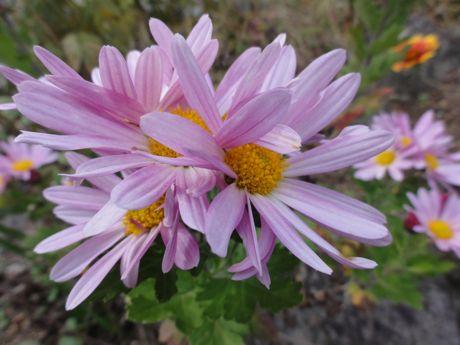 堀の土手の花−1.jpg