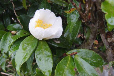 小雨の花−4.jpg