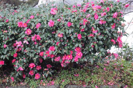 小雨の花−5.jpg