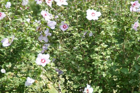 帰路見かけた花−1.jpg