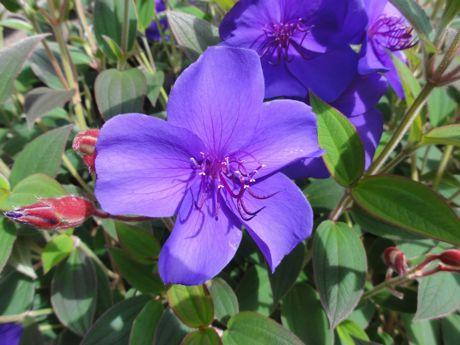 庭の花−2.jpg