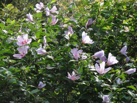 本社工場横の土手の花−2.jpg