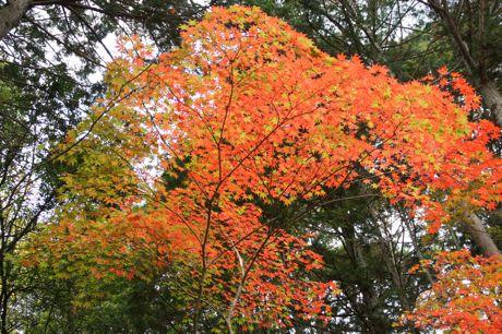 洞光寺の紅葉−1.jpg