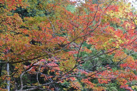 洞光寺の紅葉−2.jpg