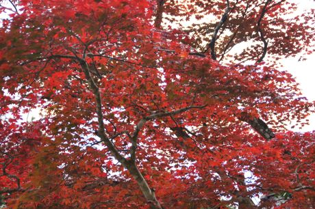 洞光寺の紅葉−3.jpg