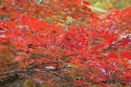 洞光寺の紅葉−4.jpg