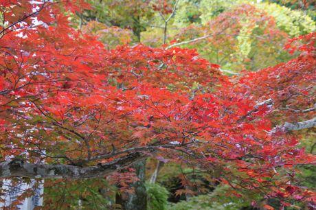洞光寺の紅葉−5.jpg