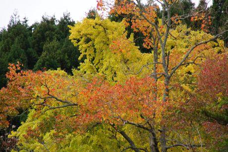 洞光寺の紅葉−6.jpg