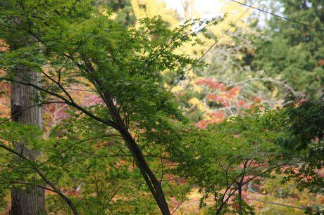 洞光寺の紅葉−7.jpg