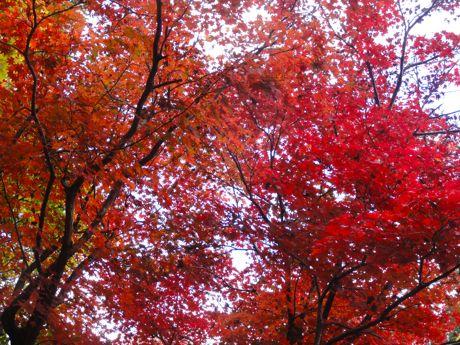 王地山公園の紅葉−1.jpg