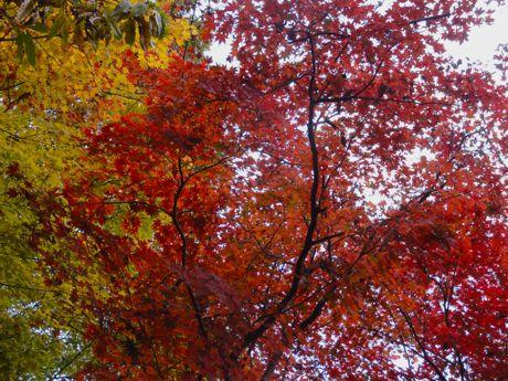 王地山公園の紅葉−2.jpg