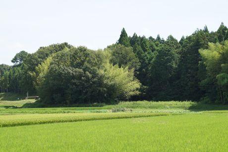 田畑の風景−1.jpg