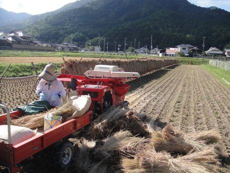 稲刈り風景−2.jpg