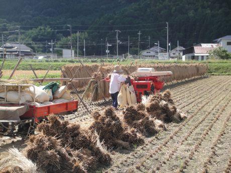 稲刈り風景−3.jpg