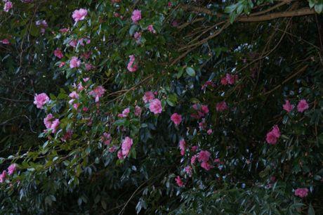 花が攻めてもの−7.jpg