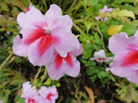 軒下の花.jpg
