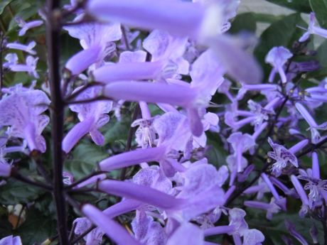 軒下の花−1.jpg