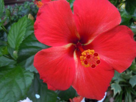 軒下の花−3.jpg