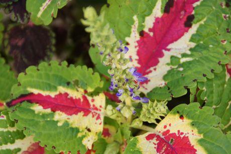 近所の軒下の花−2.jpg