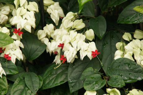 道端の花ーB.jpg