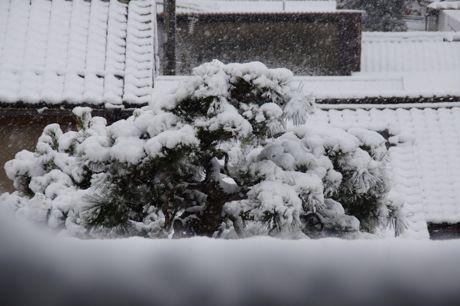降りだした雪−1.jpg