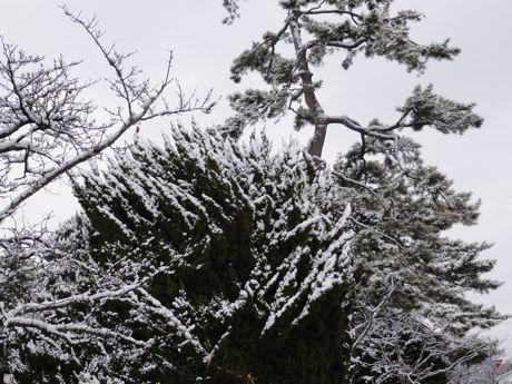 雪化粧−1.jpg