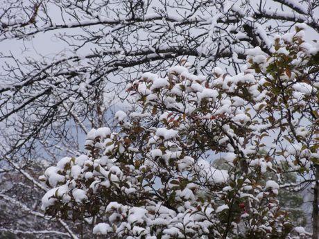 雪化粧−2.jpg