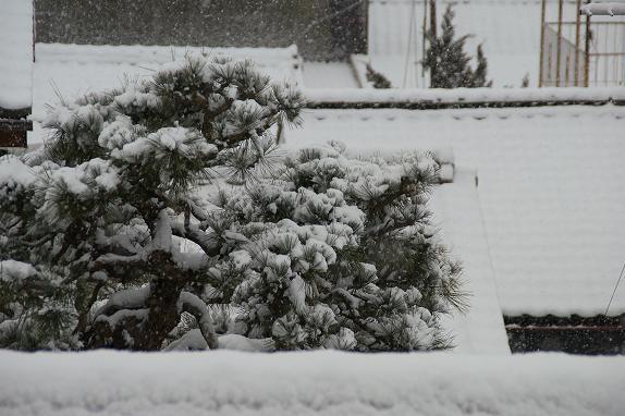 雪10/2/6/-1★.jpg