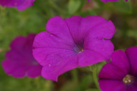 黒岡川辺の花−4.jpg
