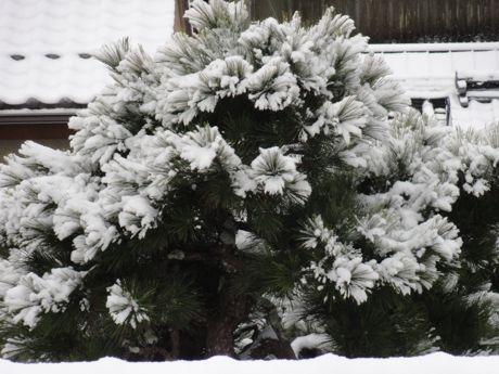 2月の積雪家の窓から.jpg