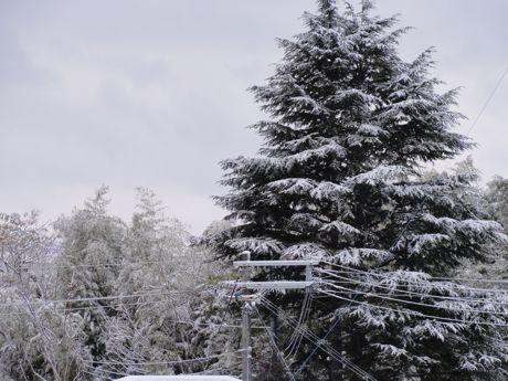 2月の積雪家の窓から−2.jpg