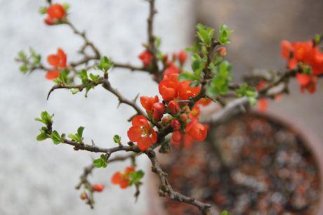 久し振りに借りた花−2.jpg