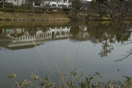 北堀に写る西庁舎9/3/18/-1.jpg