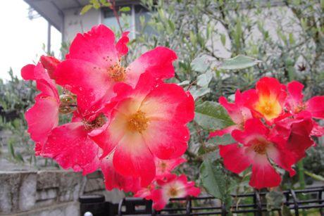 小雨の花−1.jpg