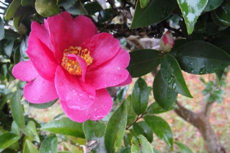 小雨の花−2.jpg