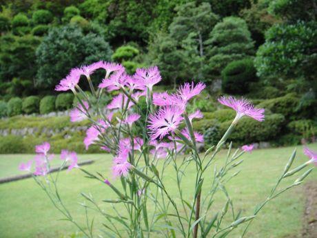 山里の花−3.jpg