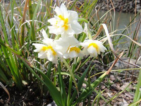 東馬出の堀の花−1.jpg