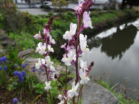 東馬出の花−2.jpg