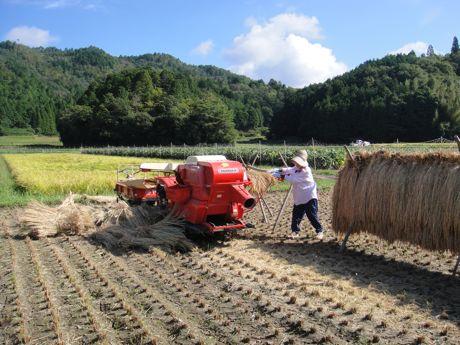 稲刈り風景−1☆.jpg