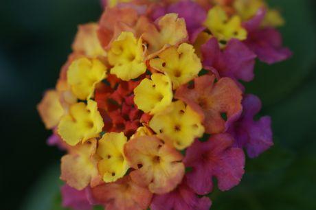 近所の軒下の花−1☆.jpg
