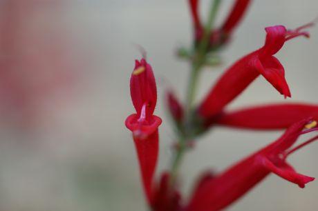 近所の軒下の花−3☆.jpg