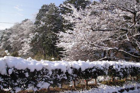 雪の城跡−5.jpg