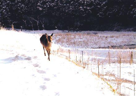 鹿−1.jpg