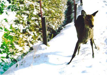鹿−3.jpg